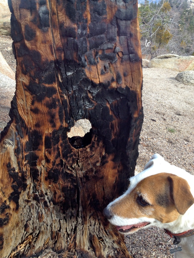 Trail art + dog.